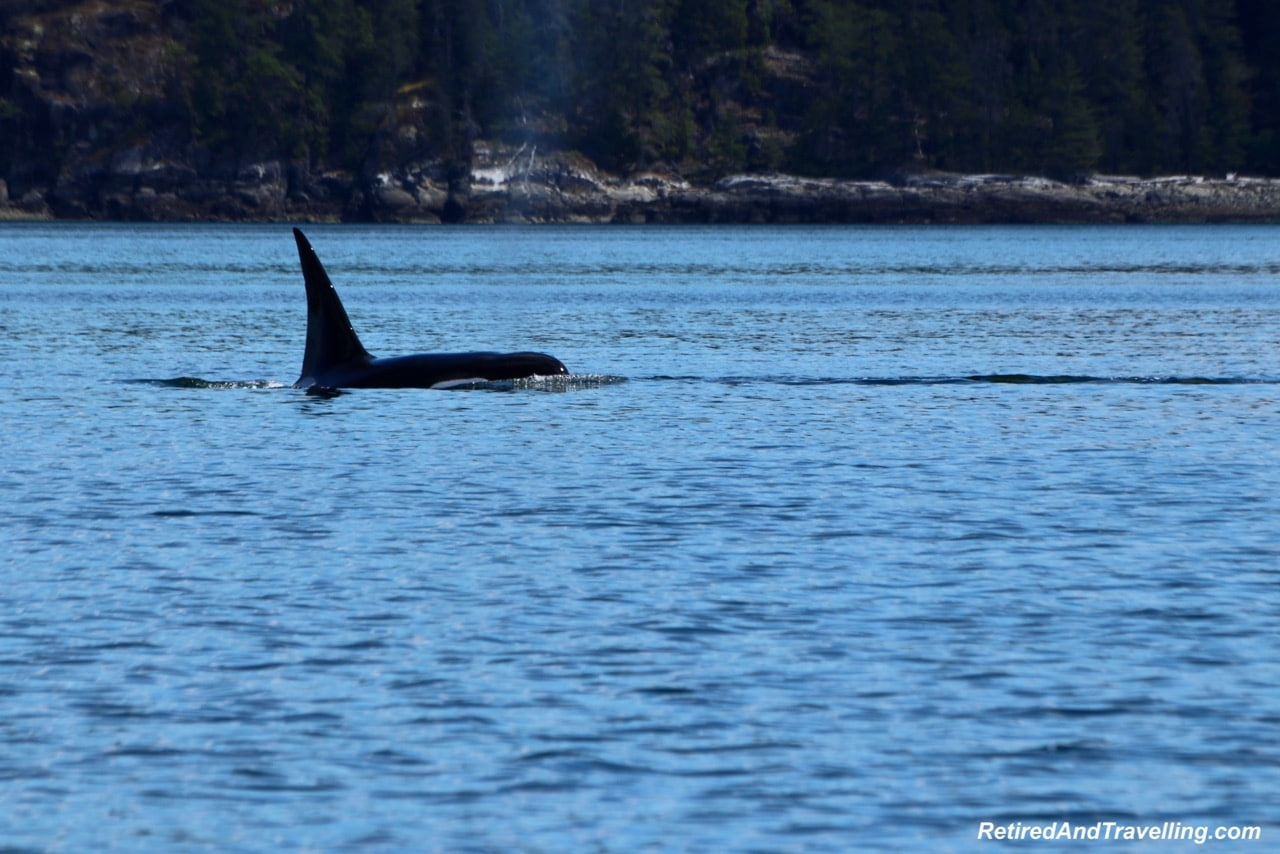 Orca Whale Watching Adventure Quest Canada - Wildlife And Whales On Vancouver Island.jpg