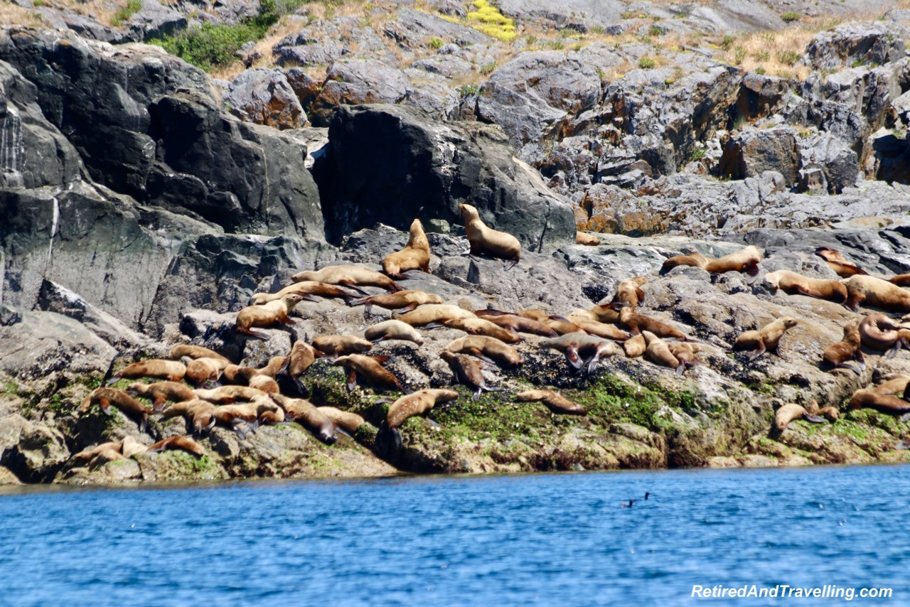 Sea Lions Mitlenatch Island.jpg