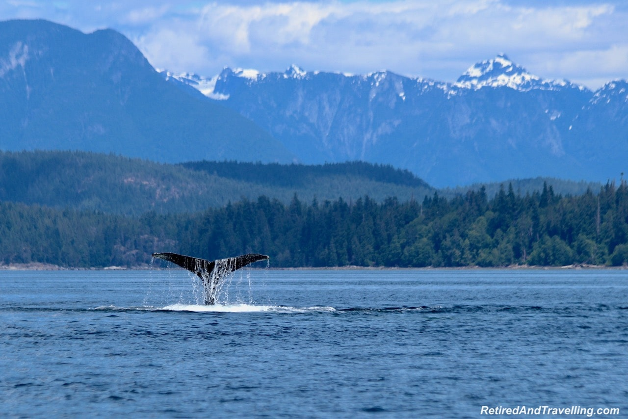 Tail Humpback Whale Watching Adventure Quest Canada - Wildlife And Whales On Vancouver Island.jpg