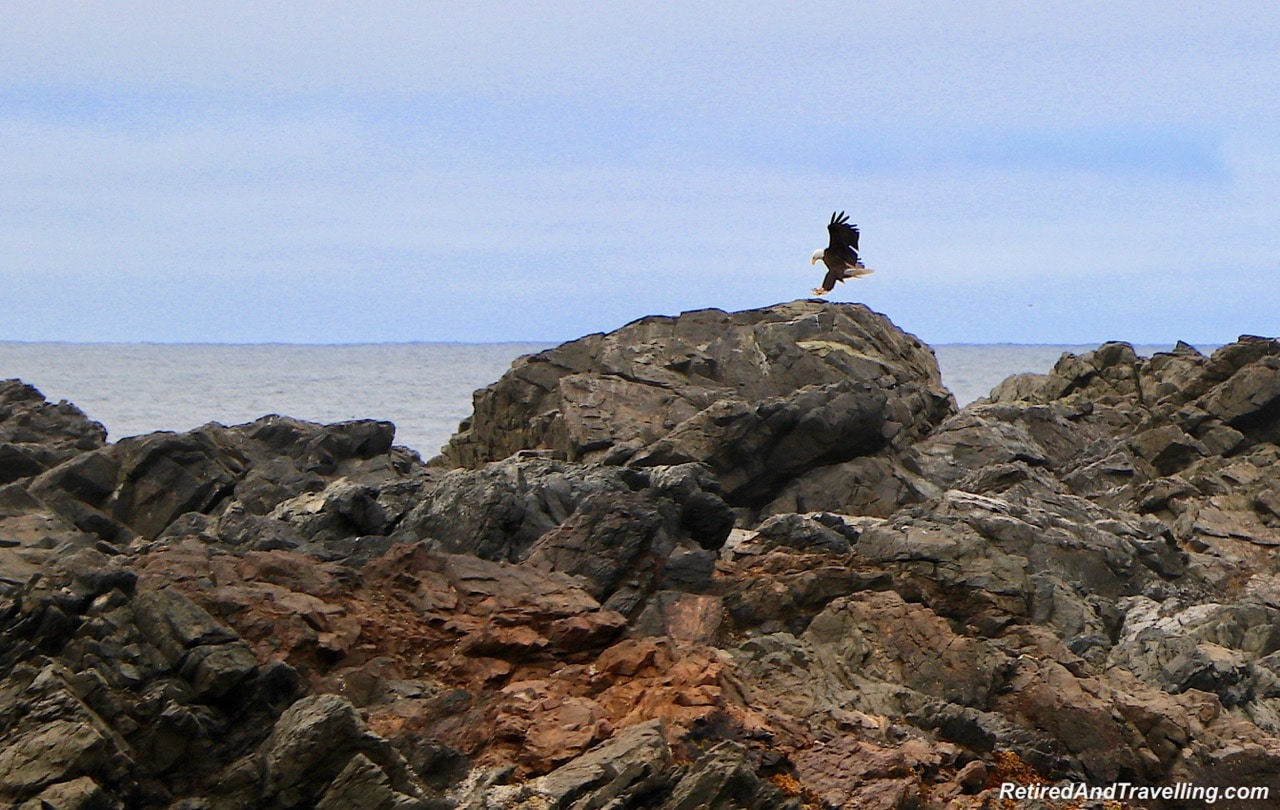 Ucluelet Eagles.jpg