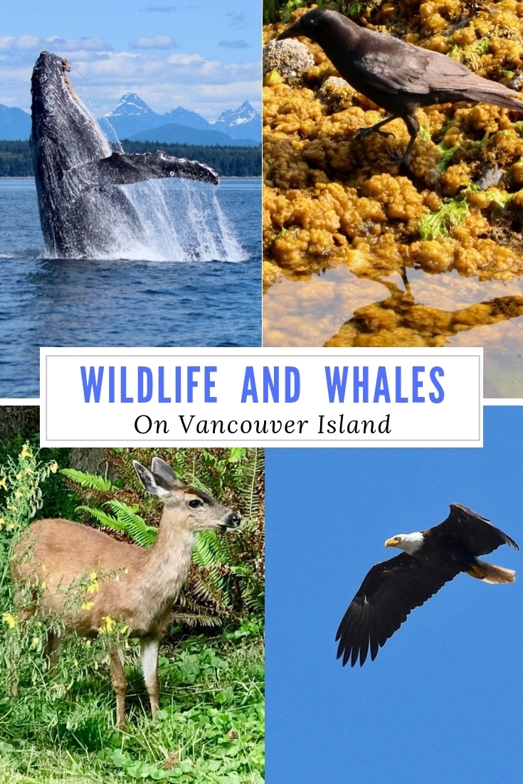 WildlifeWhalesPIN1-2019-06-3-13-30.jpg