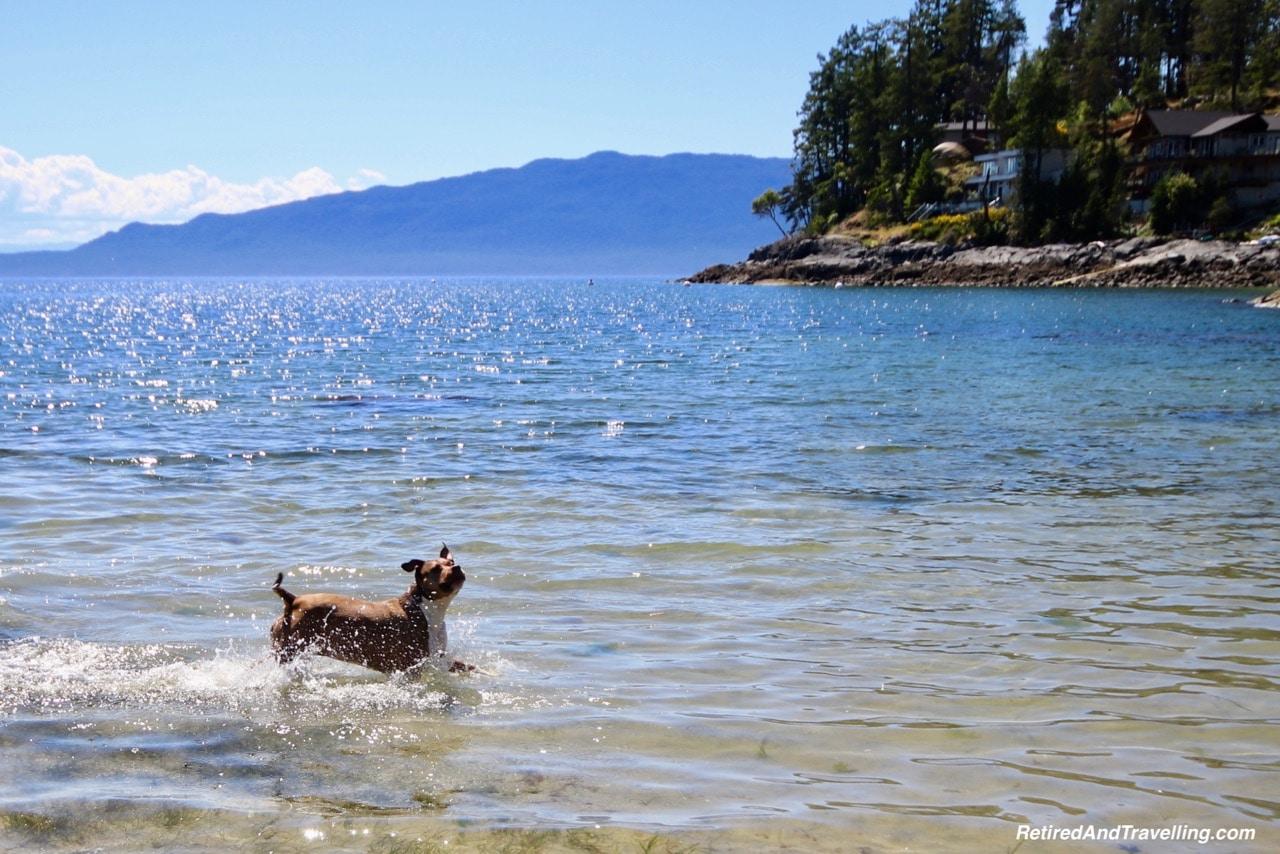 Gypsy Swims.jpg
