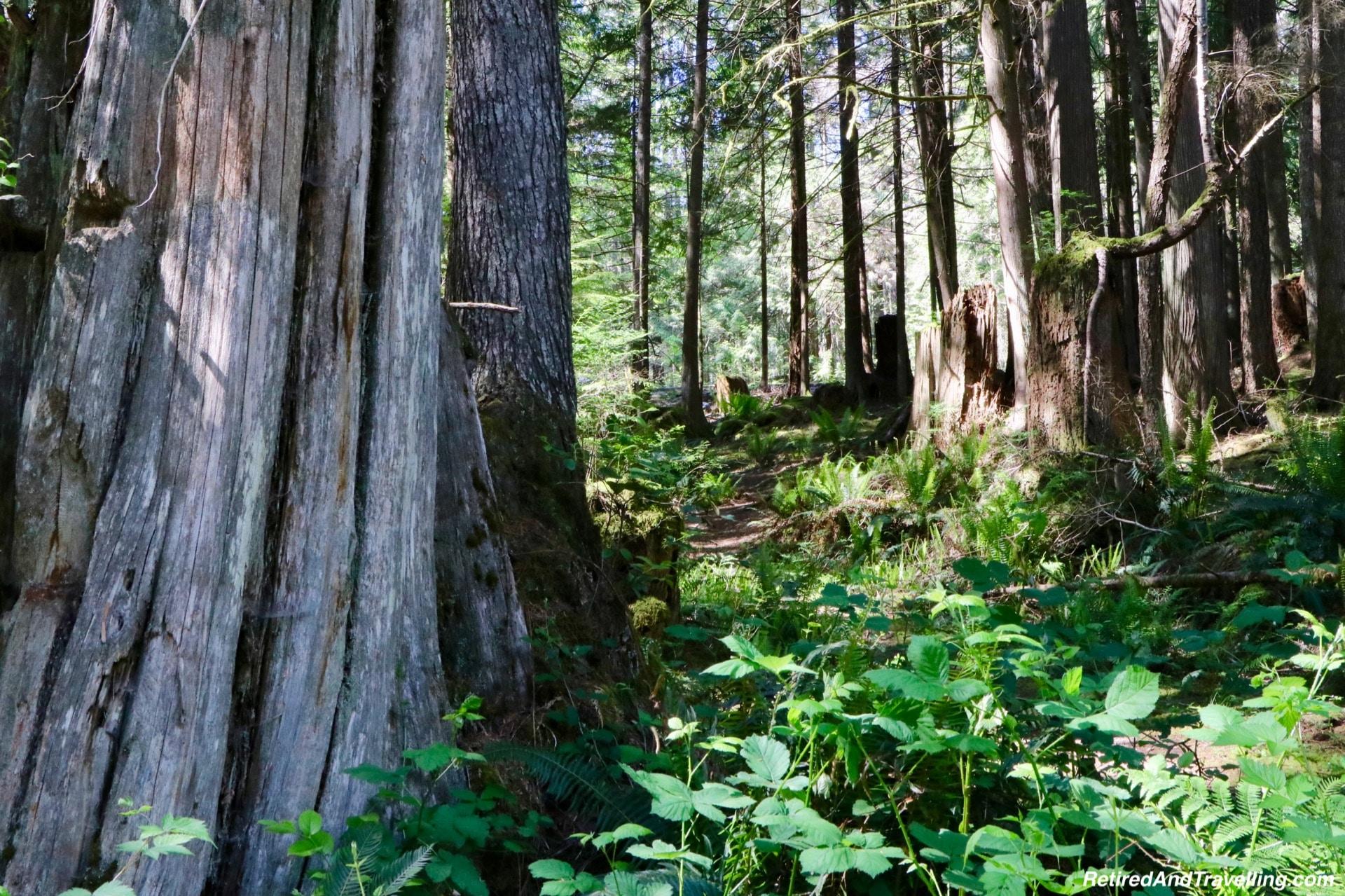 Skookumchuck Narrows Park - On The Sunshine Coast in BC.jpg