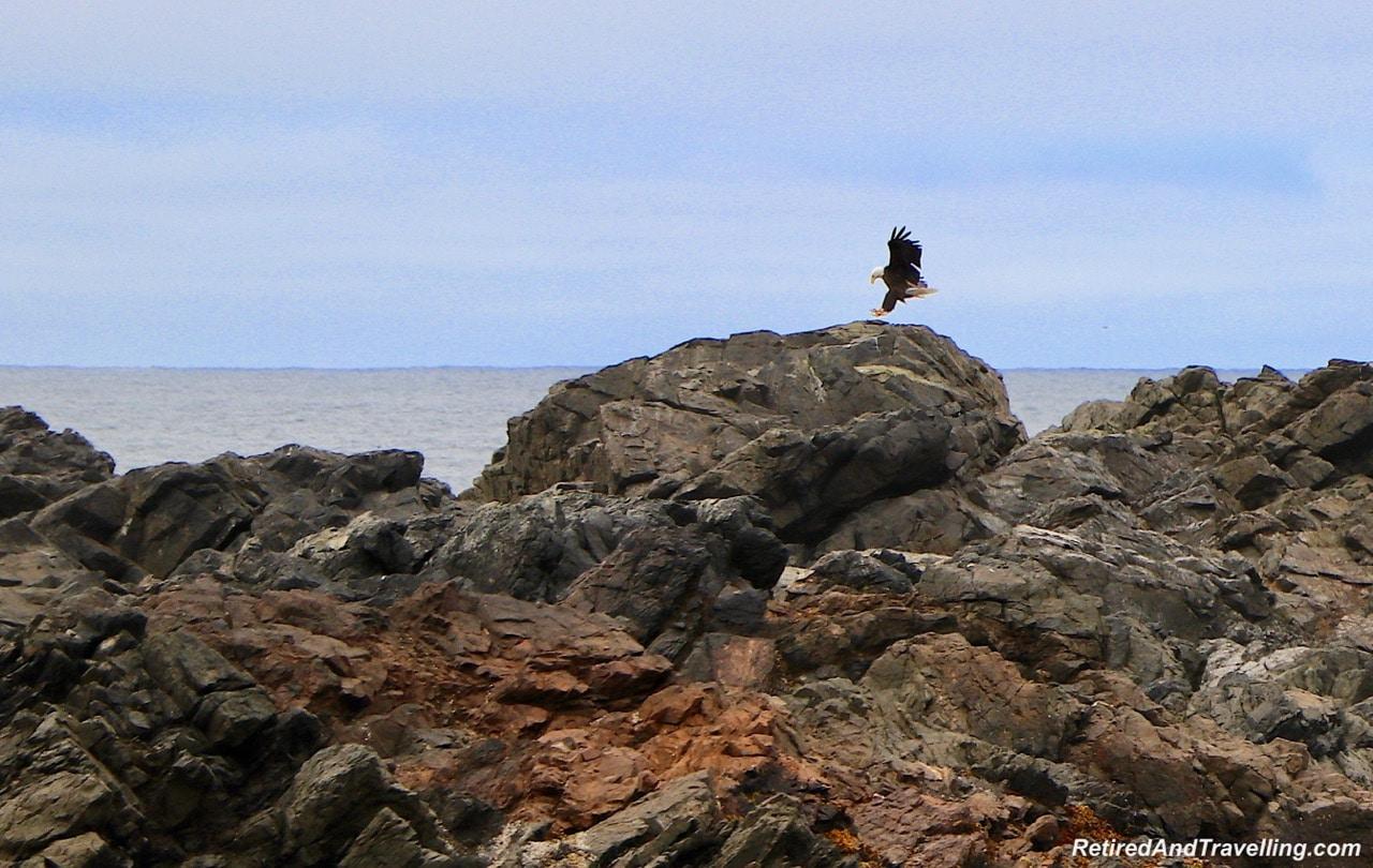 Amphitrite Point Lighthouse Eagle.jpg