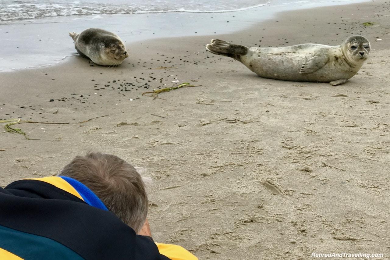 Grenen Point Seals.jpg