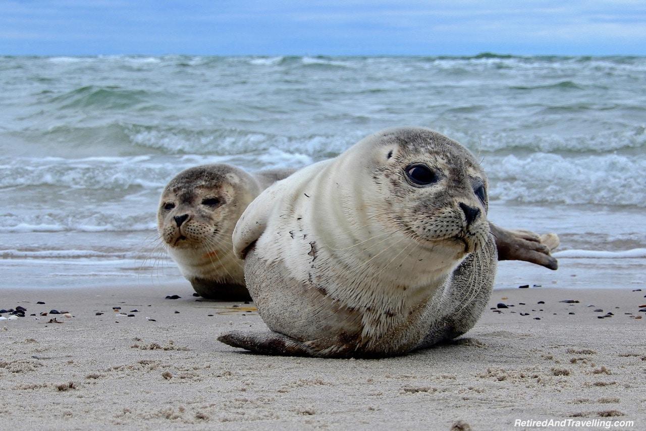 Grenen Point Seals - Things To Do In Skagen.jpg